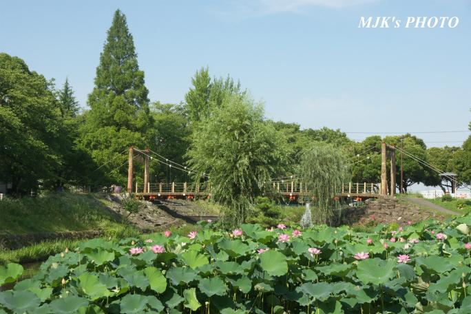 mitsumata4311.jpg
