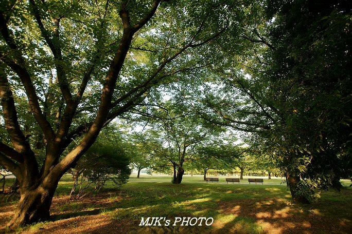 mypark00504.jpg