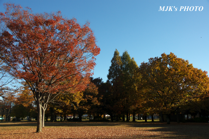 mypark1022.jpg