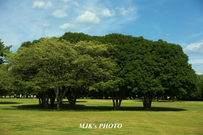 mypark1638.jpg