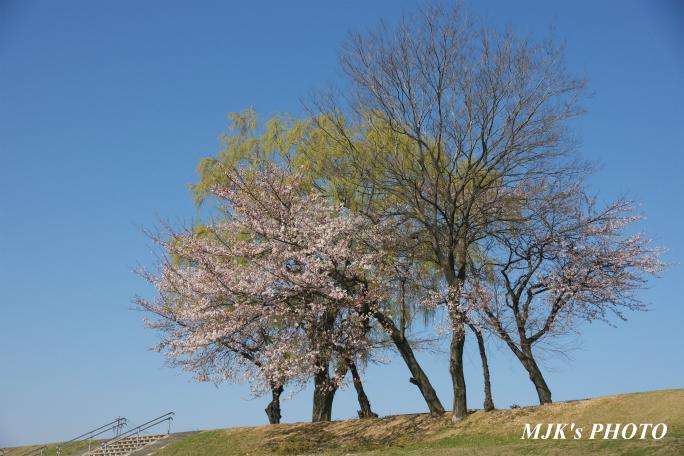 mypark2143.jpg