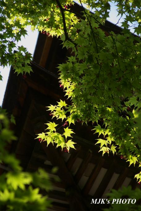 saimyouji3150.jpg