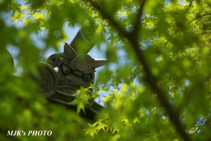 saimyouji3153.jpg