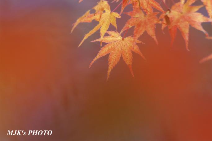satoyama1029.jpg