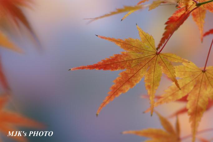 satoyama1035.jpg