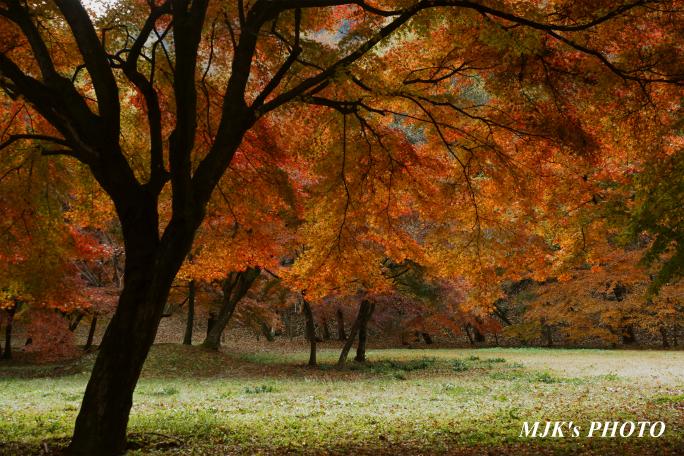 satoyama1039.jpg
