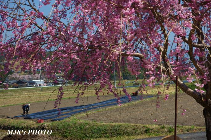 satoyama1347.jpg