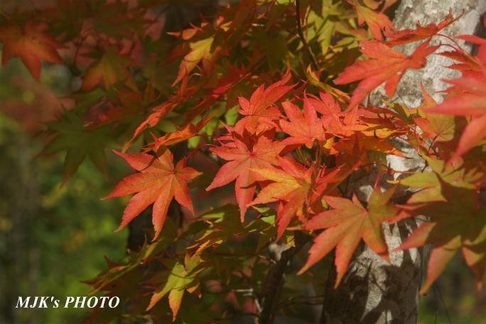 seseragi3603.jpg