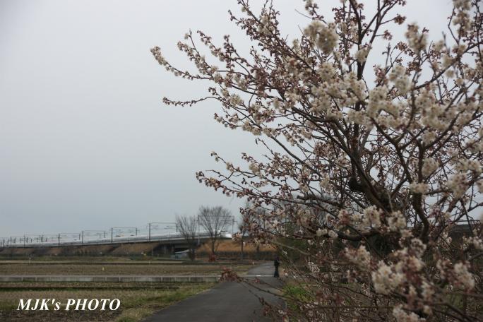 shinkansen2101.jpg