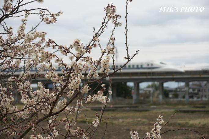 shinkansen2102.jpg
