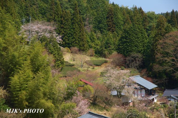 shiomi1368.jpg