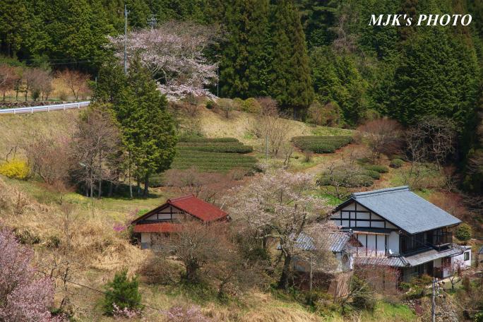 shiomi1369.jpg