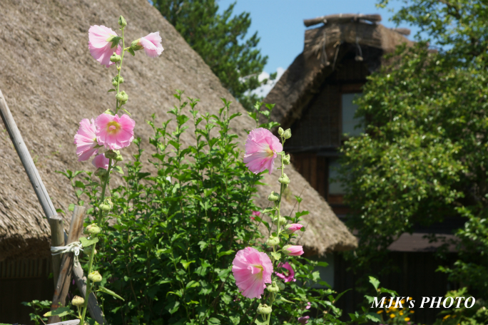 shirakawago4365.jpg