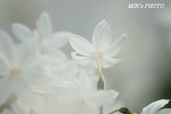shirotoriteien00171.jpg