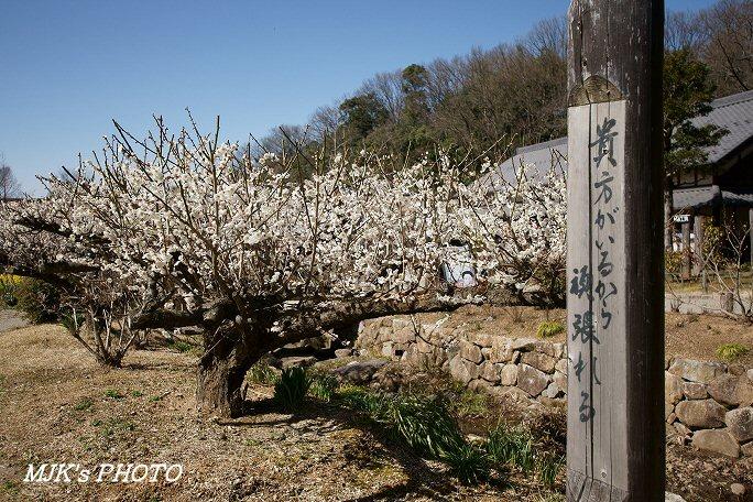 showamura00363.jpg