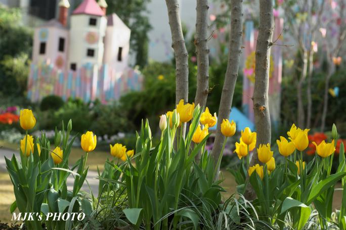 springflower3845.jpg