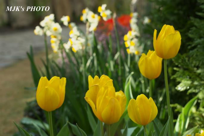 springflower3846.jpg