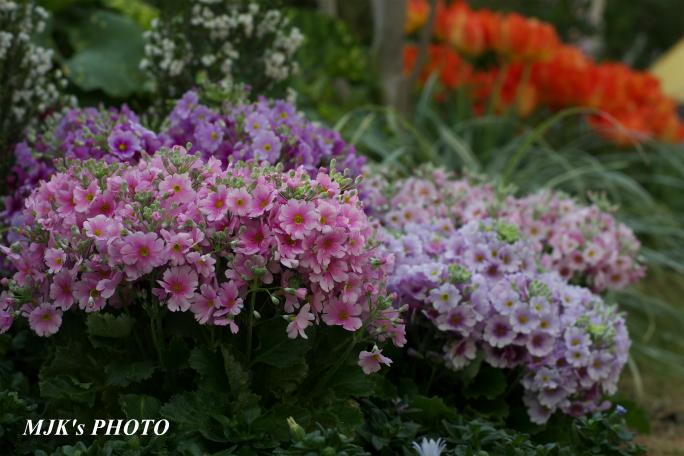 springflower3847.jpg