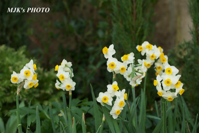 springflower3849.jpg