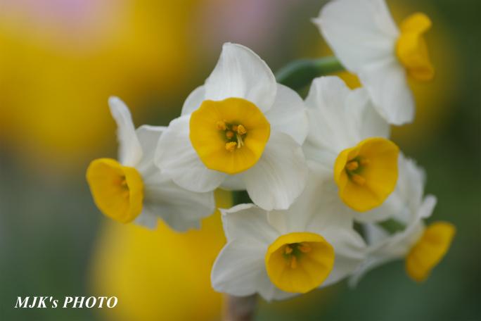 springflower3850.jpg