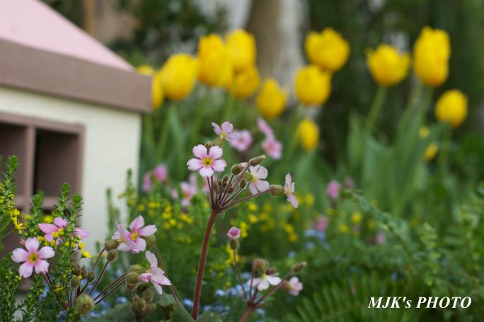 springflower3852.jpg