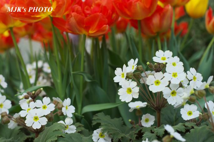springflower3853.jpg