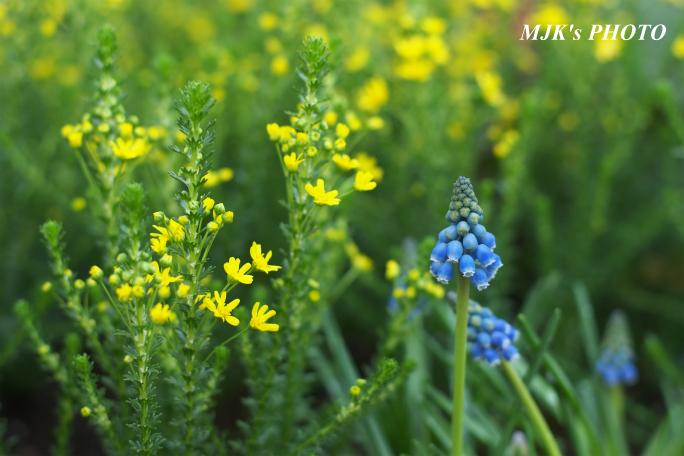 springflower3854.jpg