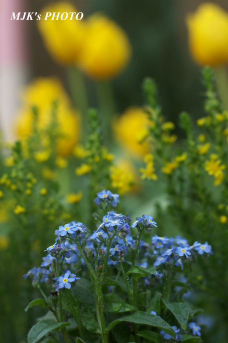 springflower3855.jpg