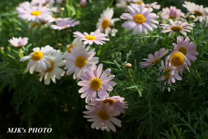 springflower3856.jpg