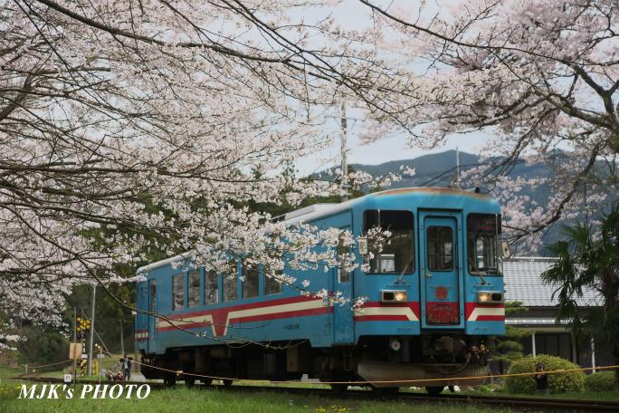 tanigumiguchi2184.jpg