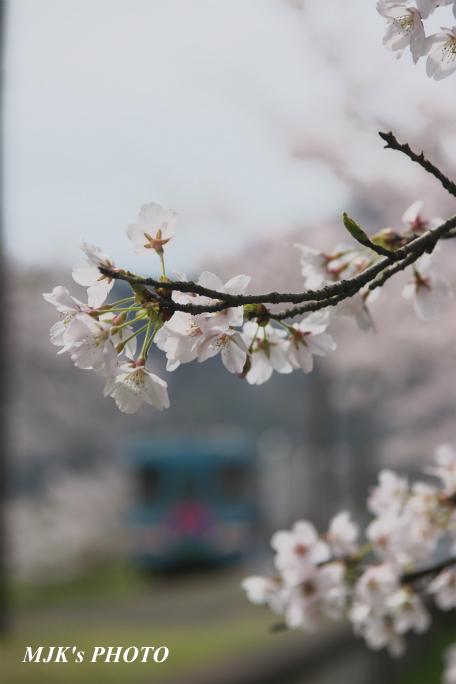 tanigumiguchi2188.jpg
