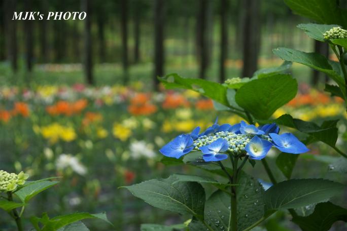 tanigumiyurien3263.jpg