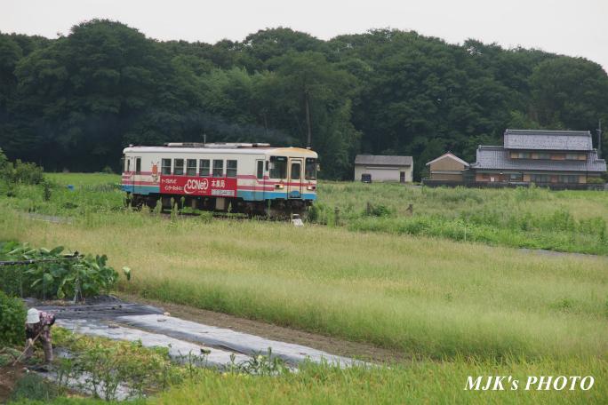 tarumi3409.jpg