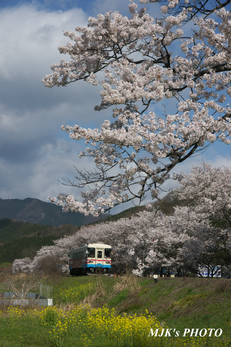 tarumi4024.jpg