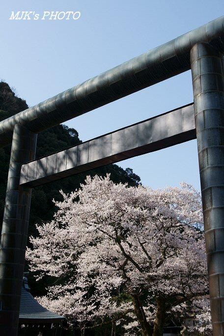 ukaizakura00367.jpg