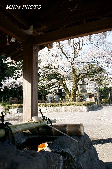 ukaizakura00370.jpg