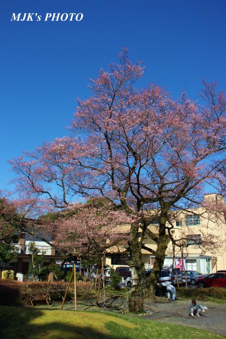 ukaizakura1262.jpg