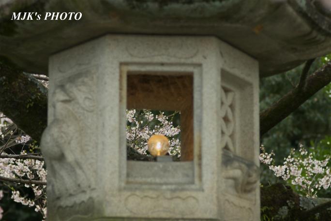 ukaizakura2128.jpg