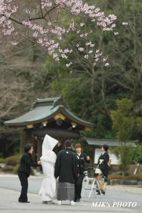 ukaizakura2131.jpg