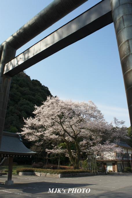 ukaizakura3006.jpg
