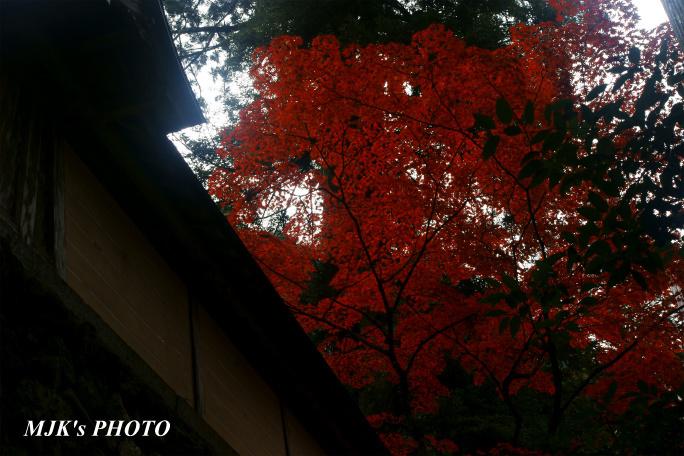 yokokura973.jpg